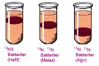 DNA deneyi