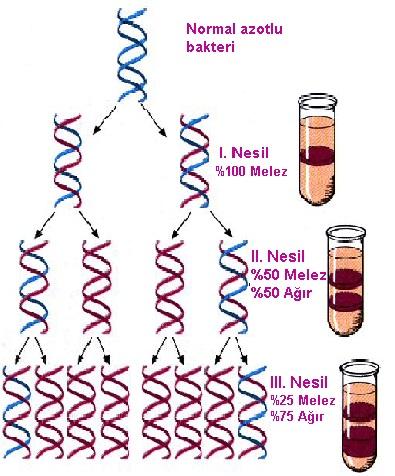 DNA eşlenmesi deneyi